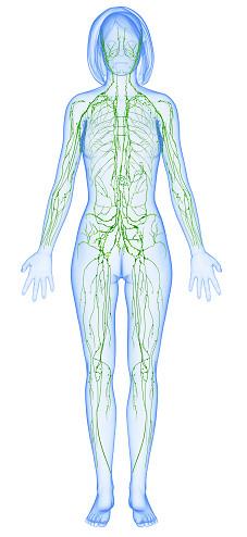 rappresentazione corpo umano femminile