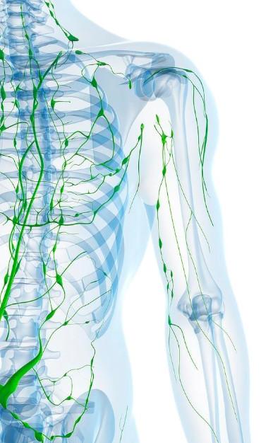 vasi venosi, arteriosi e linfatici che possono causare il linfedema
